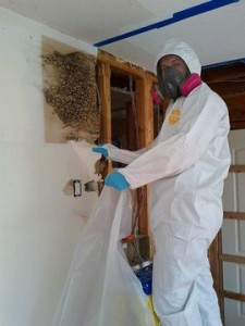 Mold Removal | 911 Restoration Seattle