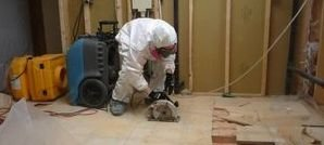 Mold Infested Floor Being Renovated By Technician